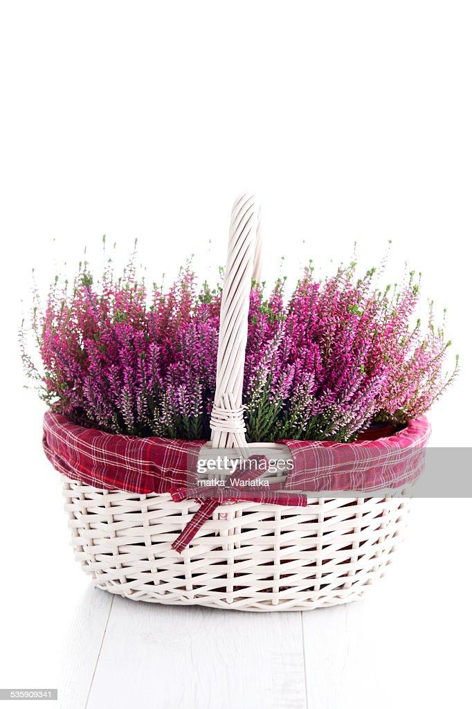heather : Stock Photo