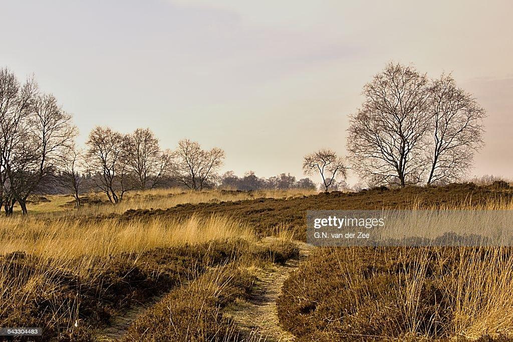 Heatherfield in wintertime