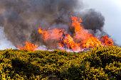 Heathland fire with gorse and black smoke