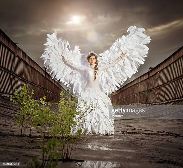 Heaven's bianco sul tetto angelo grigio