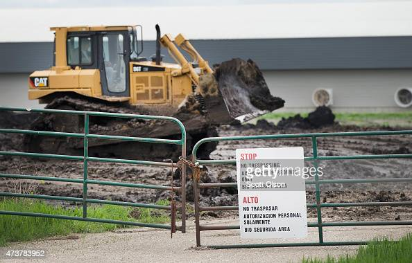 Heavy equipment operators dig in a field near a row of buildings at a farm operated by Daybreak Foods which has been designated 'bio security area'...