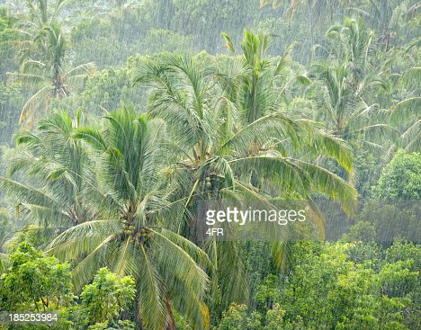 Heavy monsoon rain in the jungle stock photo getty images for Monsoon de