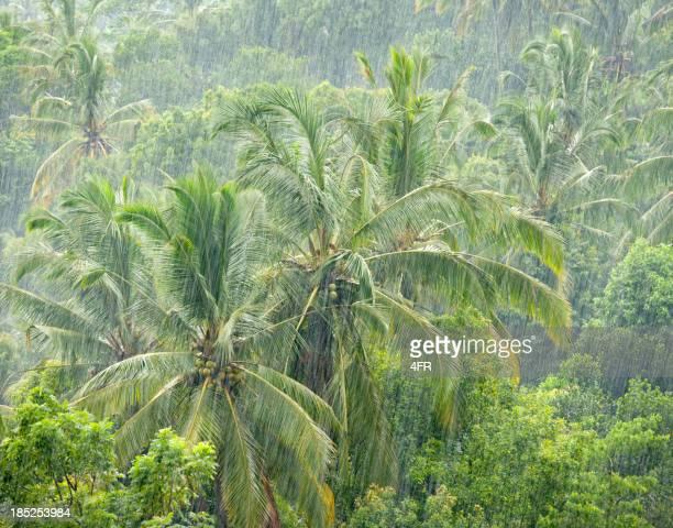 Heavy Monsoon Rain in the Jungle (XXXL)