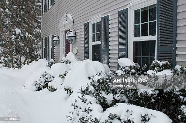 Heavy snow from a blizzard blankets these shrubs.