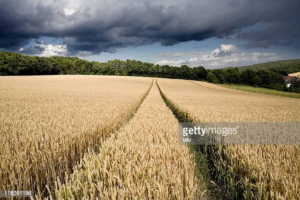 Heavy thunderstorm approaching wheat field