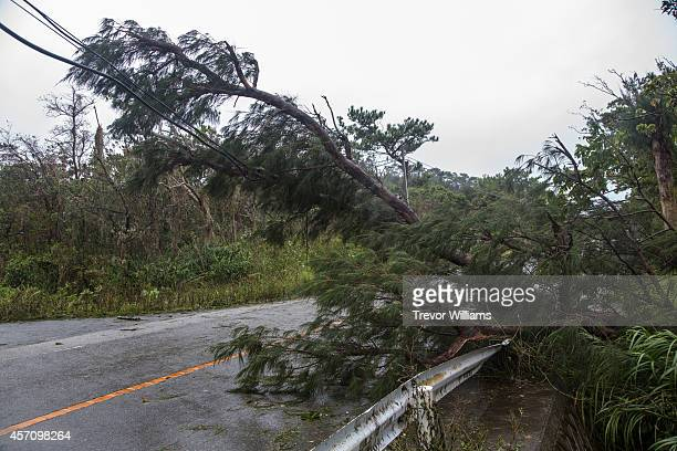 Heavy winds from Typhoon Vongfong toppled trees which brought down power lines and caused power outages on October 12 2014 in Okinawa Japan According...