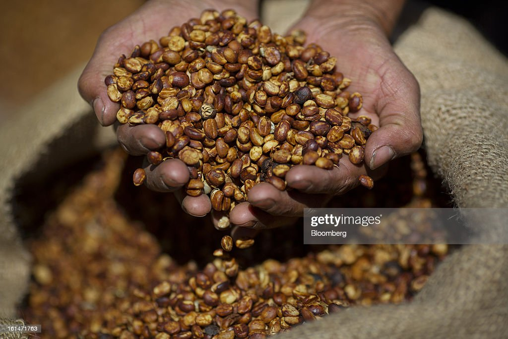 Hector Perez, a small batch coffee producer, holds a handful of drying coffee near Antigua, Guatemala on Saturday, Feb. 9, 2013. The Guatemalan National Coffee Association said that rust disease, known as roya in Spanish, will destroy 15 percent of the 2012-2013 harvest and as much as 40 percent of next season's harvest. Photographer: Victor J. Blue/Bloomberg via Getty Images