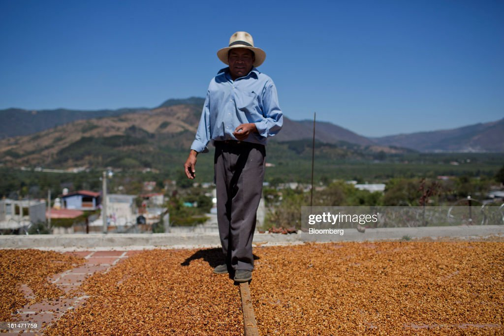 Hector Perez, a small batch coffee producer, stands on the roof where coffee is dried near Antigua, Guatemala, on Saturday, Feb. 9, 2013. The Guatemalan National Coffee Association said that rust disease, known as roya in Spanish, will destroy 15 percent of the 2012-2013 harvest and as much as 40 percent of next season's harvest. Photographer: Victor J. Blue/Bloomberg via Getty Images