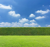 hedge with sky and grass background
