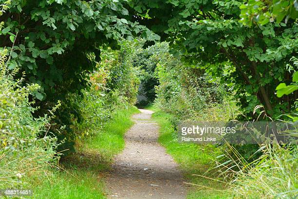 Hedges Path in Summer