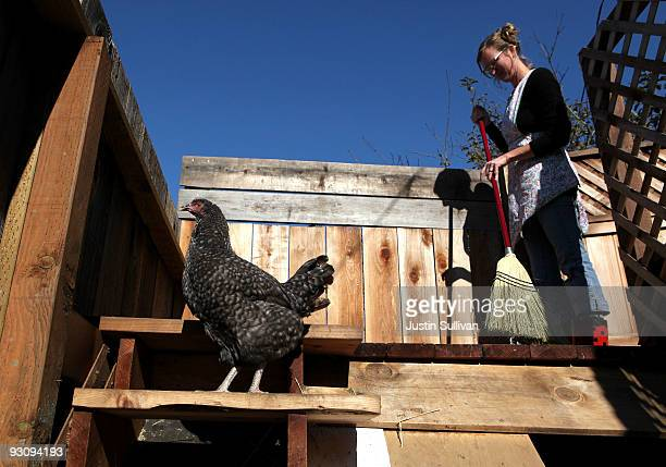 Heidi Kooy sweeps the deck as one of her chickens walks through her yard which she calls the 'Itty Bitty Farm in the City' November 16 2009 in San...