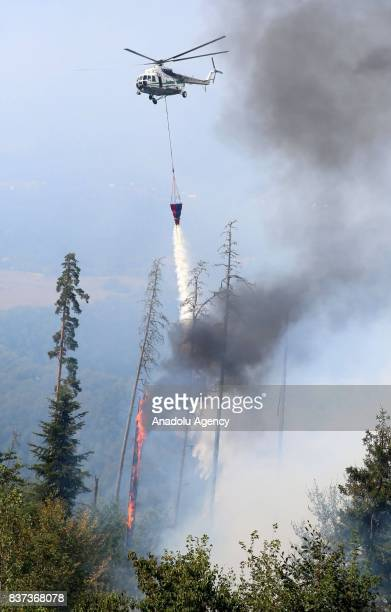 A helicopter pours water on wildfire as fire continues in Daba and Tsagveri villages of Tbilisi's Borjomi Valley Georgia on August 22 2017 Turkey...
