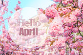 hello april text with pink blooming sakura on background