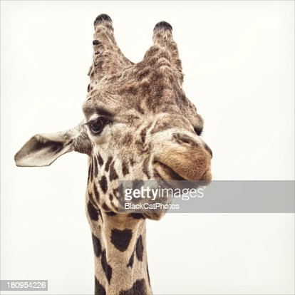 Hello down there : Stock Photo