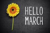 "Gerbera and text ,,Hello March"" writen on blackboard"