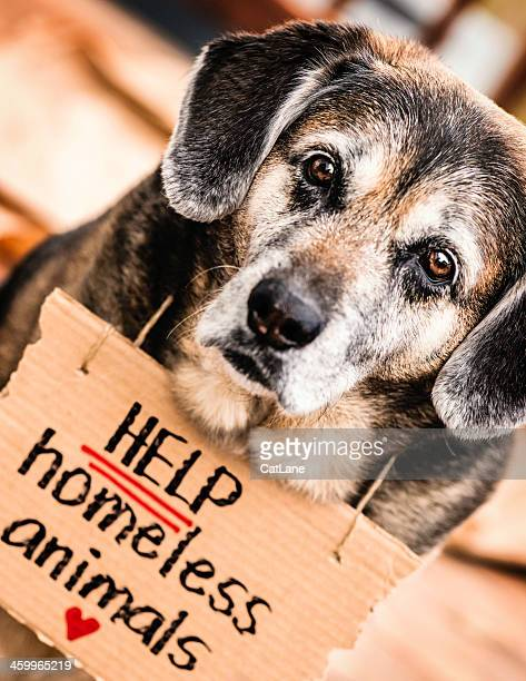 Help Homeless Animals