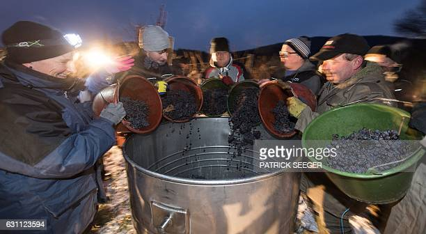 Helpers pour gathered grapes in a vat at a vineyard in Kiechlinsbergen southern Germany on January 7 2017 The frozen grapes are gathered to produce...