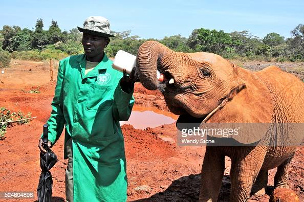 Helping save the lives of orphaned elephants and rhinos who are ultimately released back into the wild is just some of the many wildlife commitments...