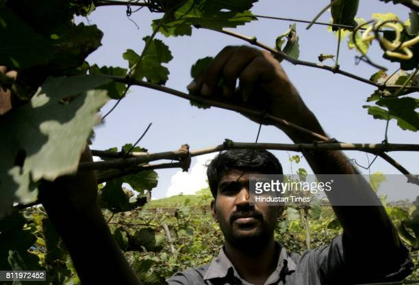 Hemant Walunj manager of Valle de Vin vineyard and winery located 12 km off the highway and 30 km before Nashik