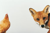 Hen and Fox