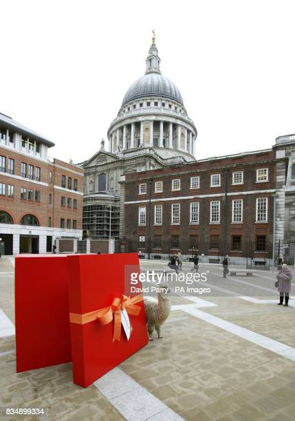 Henry the Llama in front of a giant gift box in Paternoster Square London for the launch of World Vision Must Have Gifts