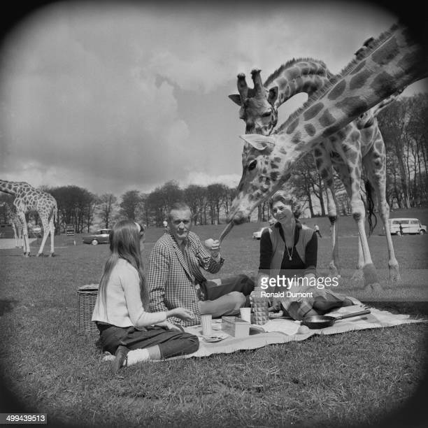 Henry Thynne Marquess of Bath his wife Virginia and their daughter Lady Silvy Cerne Thynne are visited by giraffes during a picnic at Longleat Safari...
