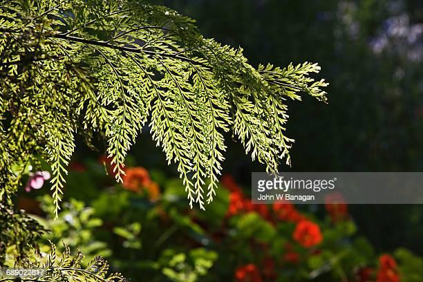 Herb garden, Botanical Gardens Melbourne