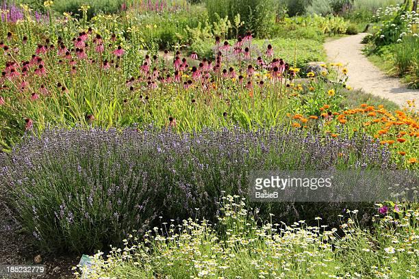 Kräutergarten im Sommer