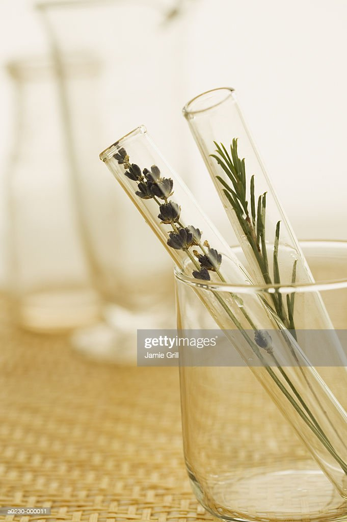 Herb Plants in Test Tubes : Stock Photo
