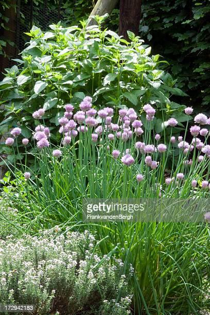 """""""Herbal garden"""" -Paket"""