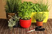 herbs and scissors
