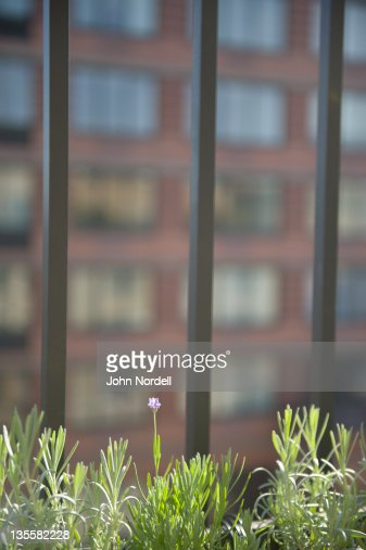 Herbs growing on terrace : Stock Photo