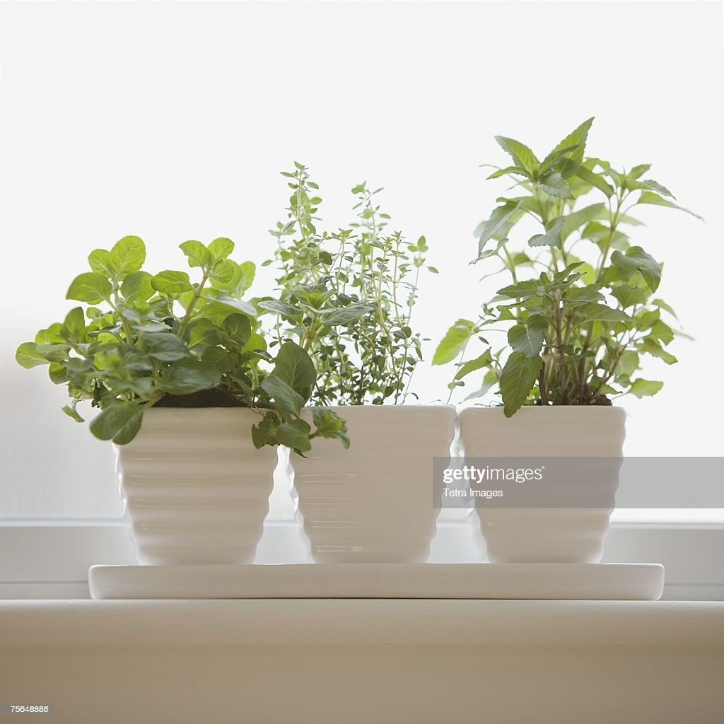 Herbs In Pots On Windowsill Stock Photo Getty Images