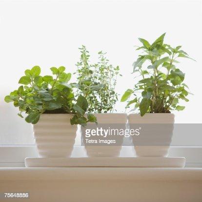 Herbs in pots on windowsill