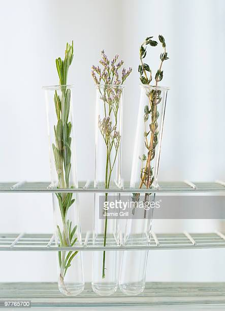 Herbs in test tubes