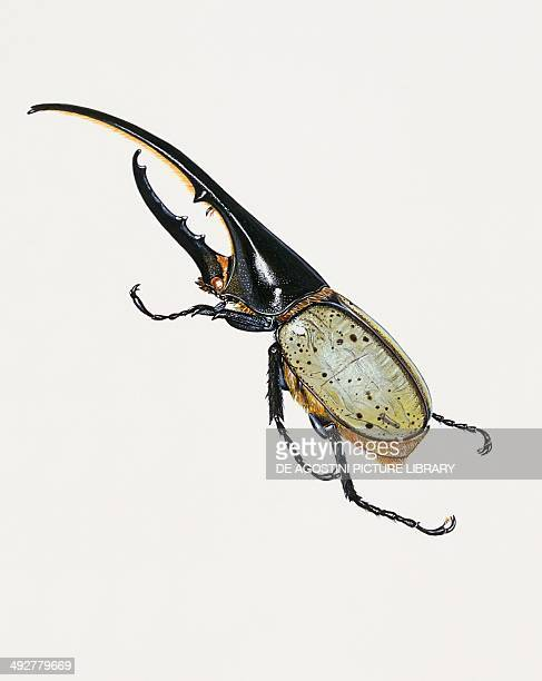 Hercules beetle Scarabaeidae Artwork by Brin Edward