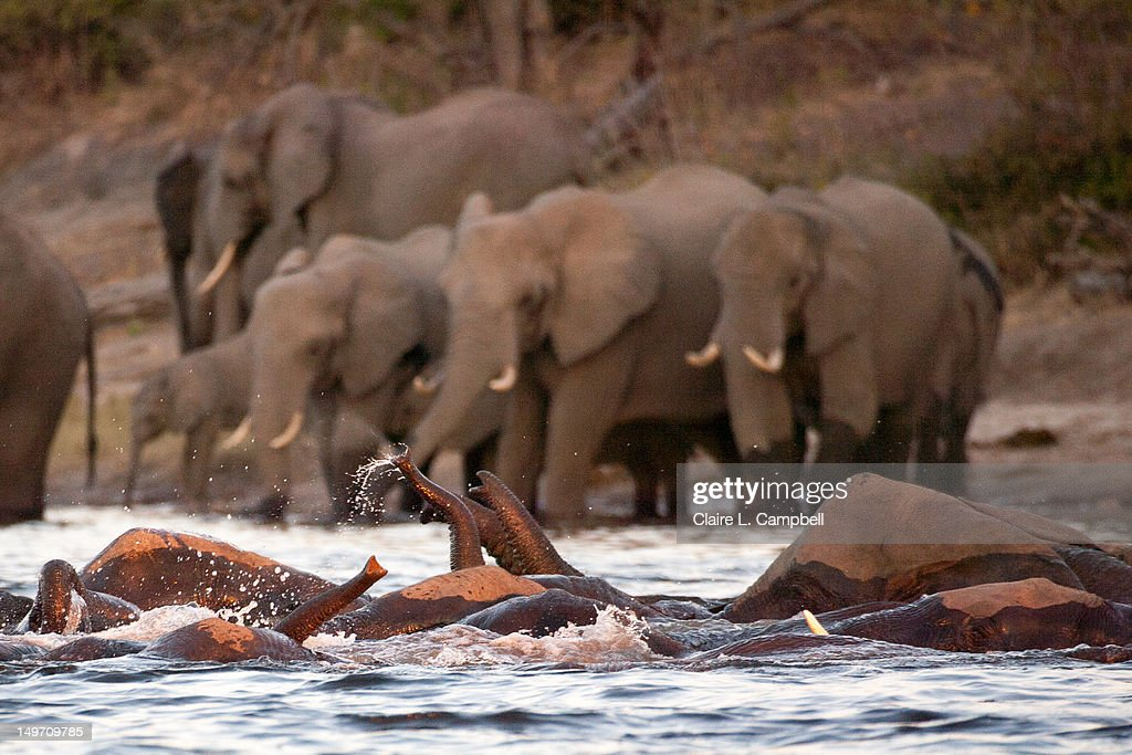 Herd heads out : Stock Photo