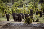 A herd of African elephants is pictured on November 17 2012 in Hwange National Park in Zimbabwe AFP PHOTO MARTIN BUREAU