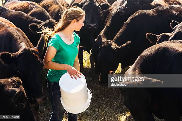 Herd of Black Angus Cattle Surrounding Female Rancher