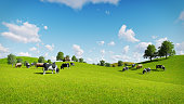 Springtime rural scenery with a herd of cows grazing on the green meadows. Realistic 3D illustration was done from my own 3D rendering file.