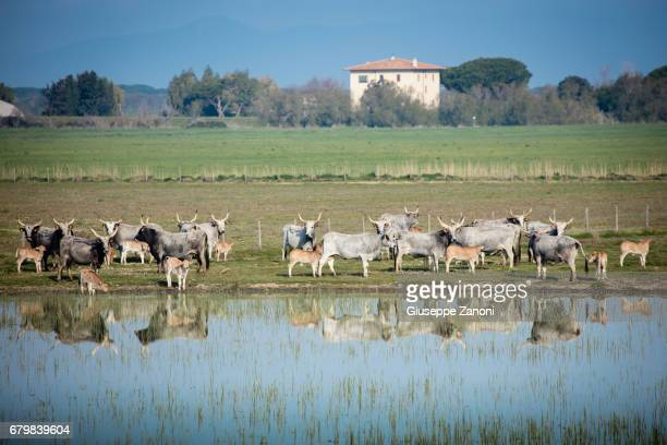 A herd of cows rest near a lake