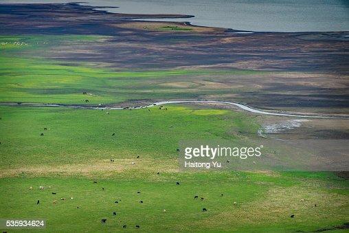 Herd of domestic animals around winding rivers : Stock Photo