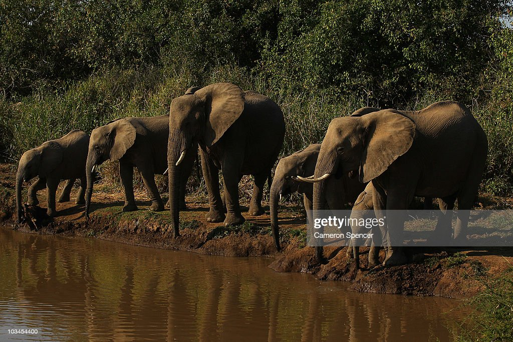 A herd of elephants drink from a river at the Mashatu game reserve on July 27, 2010 in Mapungubwe, Botswana. Mashatu is a 46,000 hectare reserve located in Eastern Botswana where the Shashe river and Limpopo river meet.