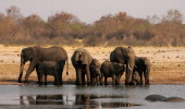 A herd of elephants drinks water at a watering pan supplied with water pumped from boreholes powered by more than 45 dieselpowered generators which...