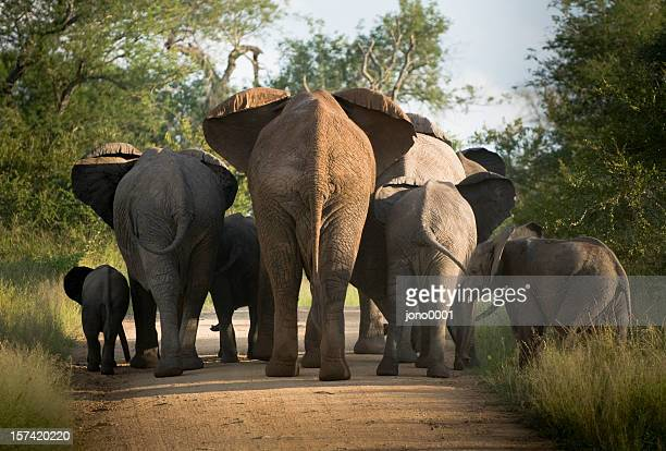 A herd of elephants heading away from us