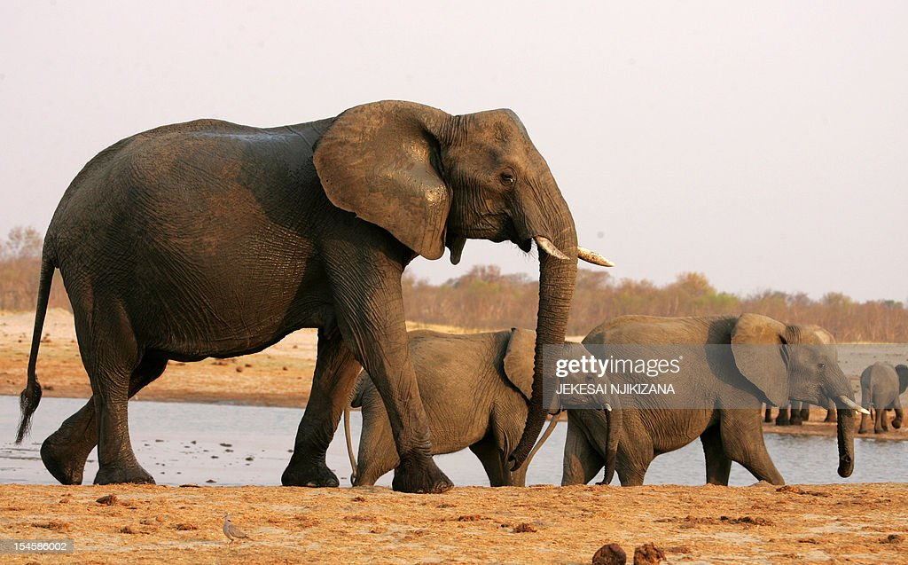 A herd of elephants walks past a watering pan supplied with water pumped from boreholes powered by more than 45 dieselpowered generators which run...