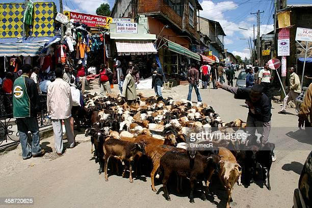 Troupeau de chèvres sur market street à Addis-Abeba
