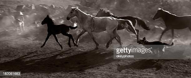 Troupeau de chevaux de course