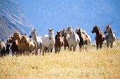 A herd of horses in the mountains