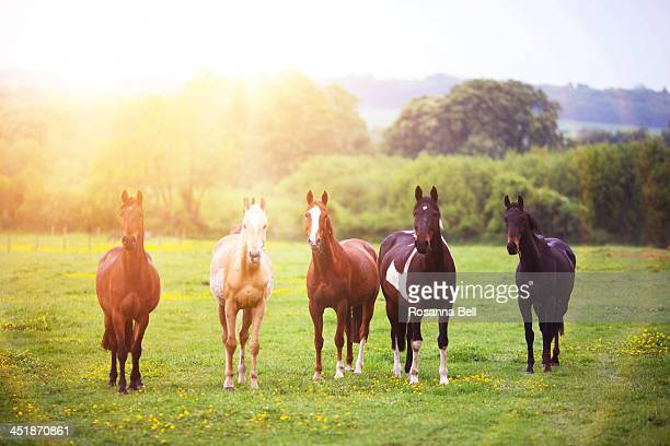 Herd of horses standing to attention